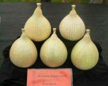 Wath Brow Hornets Onion Club