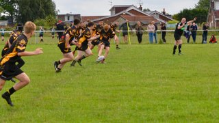 Bears Blacks v Crosfields