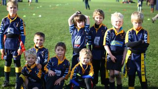 U7's C Festival at Rosslyn Park - 9th Nov 2014