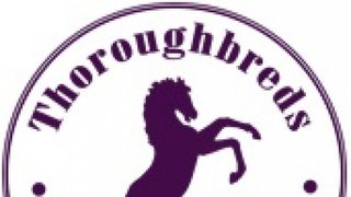 Friendly matches - Thoroughbreds