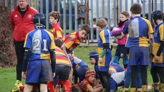 PRUFC U12's at Leicester Tigers Tournament Feb 2017