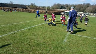 Over seventy five teams took part in TringRugby Minis Festival
