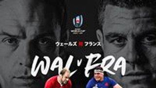 RUGBY WORLD CUP QUARTER FINALS 19-20 OCTOBER