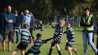 Henley Rugby Festival October 2015