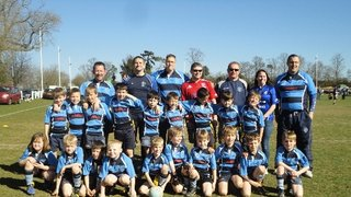 Mighty Under 8's win again!