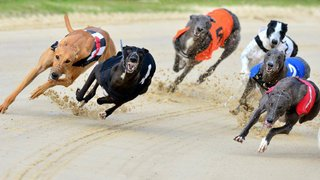 CHC Social - Dog Racing