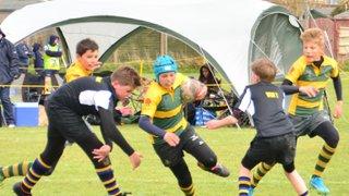Tigers Challenge Festival - Bognor - 9th & 10th April 2016