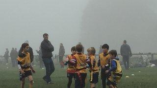 Bushy_Park_1_November_in_mist