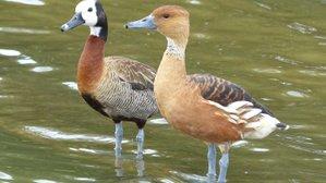 Lovely Weather For Ducks