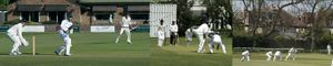 Adult Cricket - Men