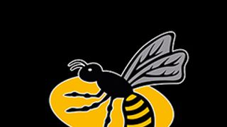 Guild takeover the Wasps!