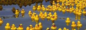 2019 Annual Duck Race