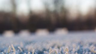 Frozen pitches