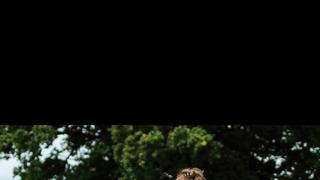 Lions U10 Rangers