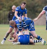 Bulls unable to stop flying Buzzards