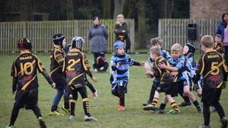 Chester Gladiators U7s v Ashton Bears