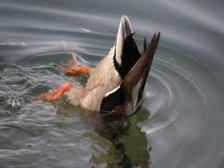 "Chris Dabell ""As tight as a Ducks A*se"""