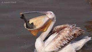 Pelicans slot 7 at 7