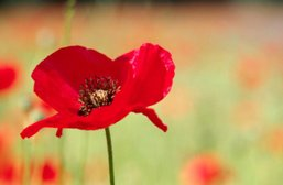 Remembrance Day service on Saturday