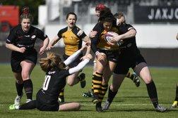 Hardworking Wasps fall to semi-final defeat