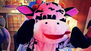 The Cow celebrates his birthday