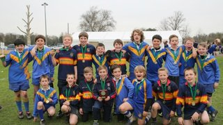 U12s Triumph in Shield Competition at Herts County Mini Rugby Festival 2014