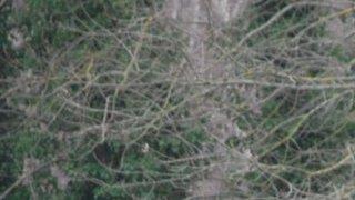Dinbych down high flying Pwllheli