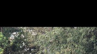 Kilmarnock v Ardrossan