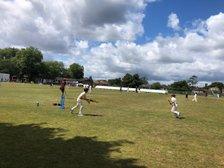 We Love Junior Cricket