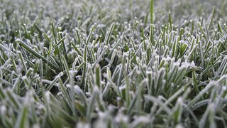 Sat 25th Nov - Micro / Mini Rugby cancelled