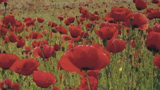 A Peace, Love & Harmony Themed Quiz In Tribute to the Centenary of The First World War