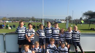 U9s Unbeaten at Luctonians Festival