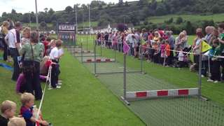 Pig Racing at Larne Rugby Club