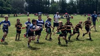 June 2017 Waterloo County Rugby Club tournament in Brantford