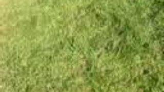 Walcot V Chippenham Colts