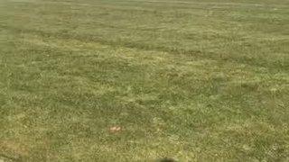 Zaccheaus Penalty