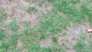 Elmore's Wet Pitch